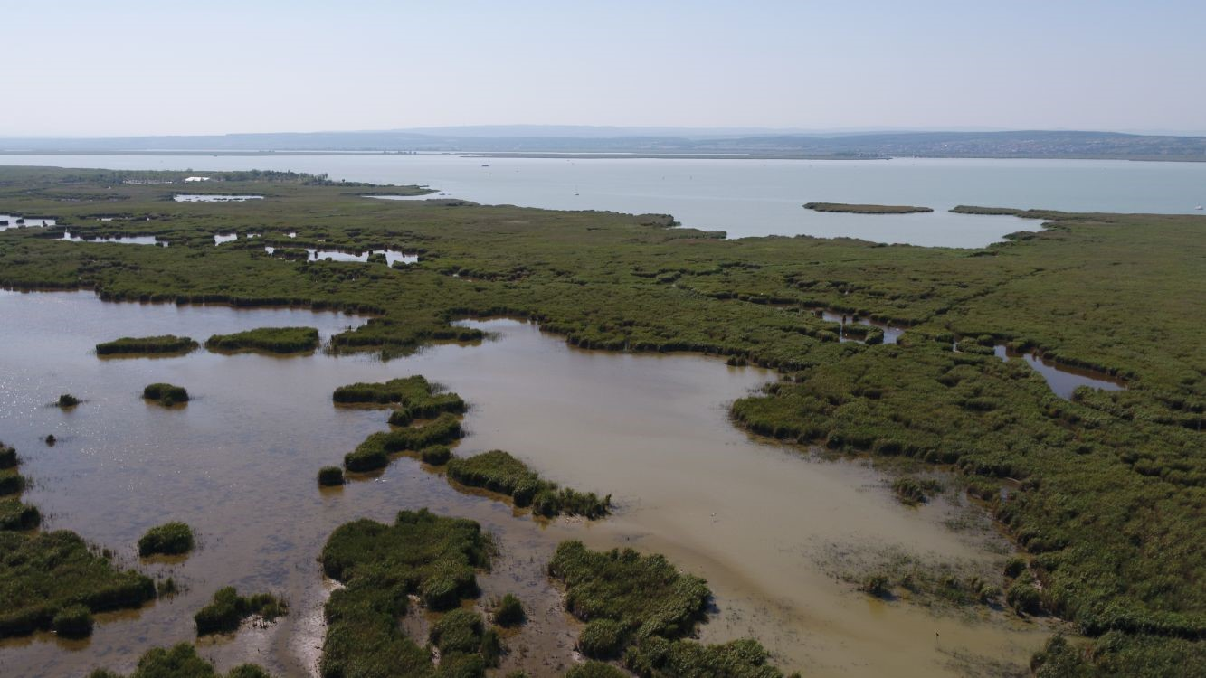 The reed belt of Lake Neusiedl